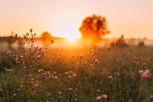 Wild flowers in sunrise